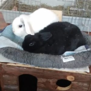 Snoopy and Bonnie snuggles bunnylove blackandwhite